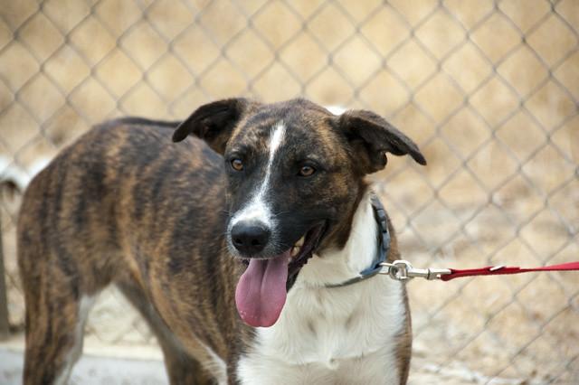 Serena for adoption