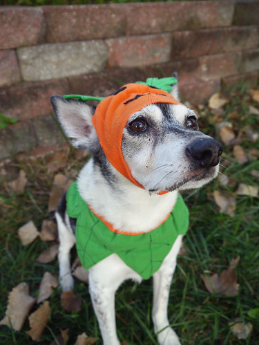 2015-09-21 - Peedee Pumpkin - 0017 [flickr]