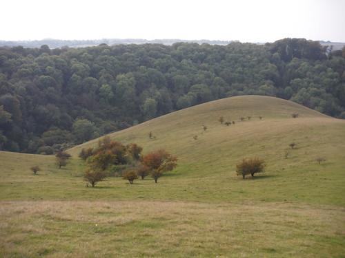 Rounded Ridge and Lee Wood, Barton Hills