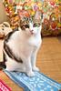 猫咪Ommie和雪花蓝色围脖
