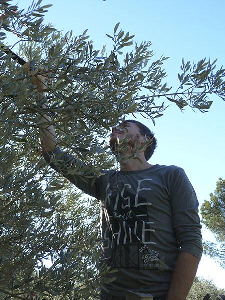 clem dans  l'arbre