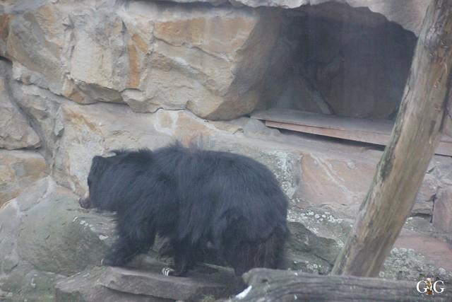 Besuch im Berliner Zoo 06.12.201592