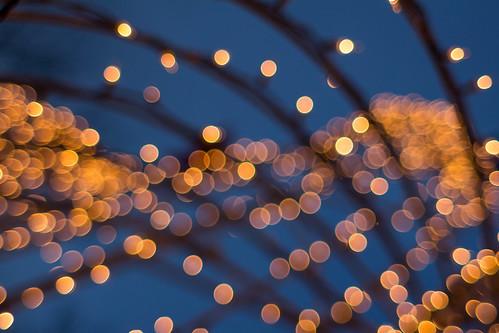 light sunset lines bokeh dusk decoration bluesky christmaslights holidaylights 2015 365project 340365 privpublic
