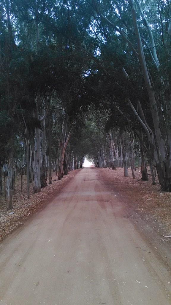 Viale costeggiato da una folta pineta che arriva sino alla Foce del Fiume Platani