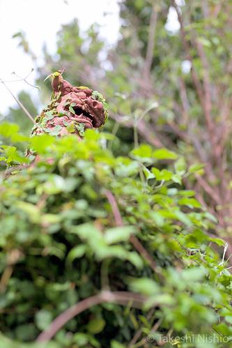 overgrown si-sa