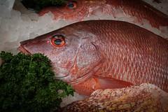 animal(1.0), fish(1.0), fish(1.0), marine biology(1.0), red snapper(1.0), fauna(1.0),