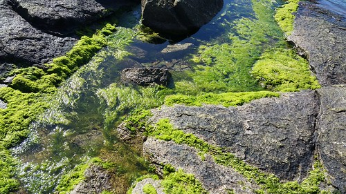 The Rolling Greens of the Ocean - 20150905_154329