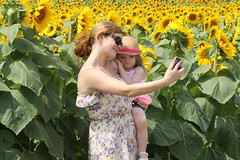 Sunflower Field Selfie