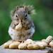 Momma's goin' nuts... by Nancy Rose