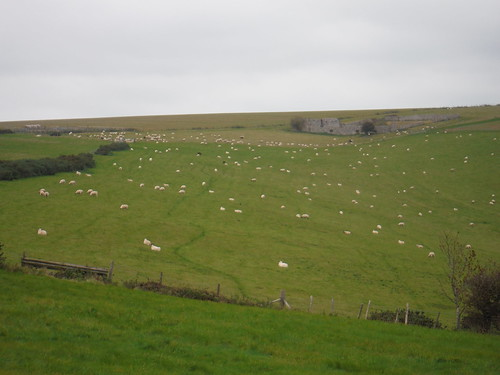 Hill Barn (and sheep), Folkington Hill