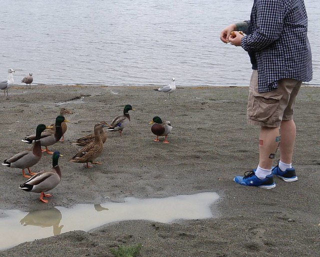 Duck pals