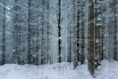 Féérique première neige