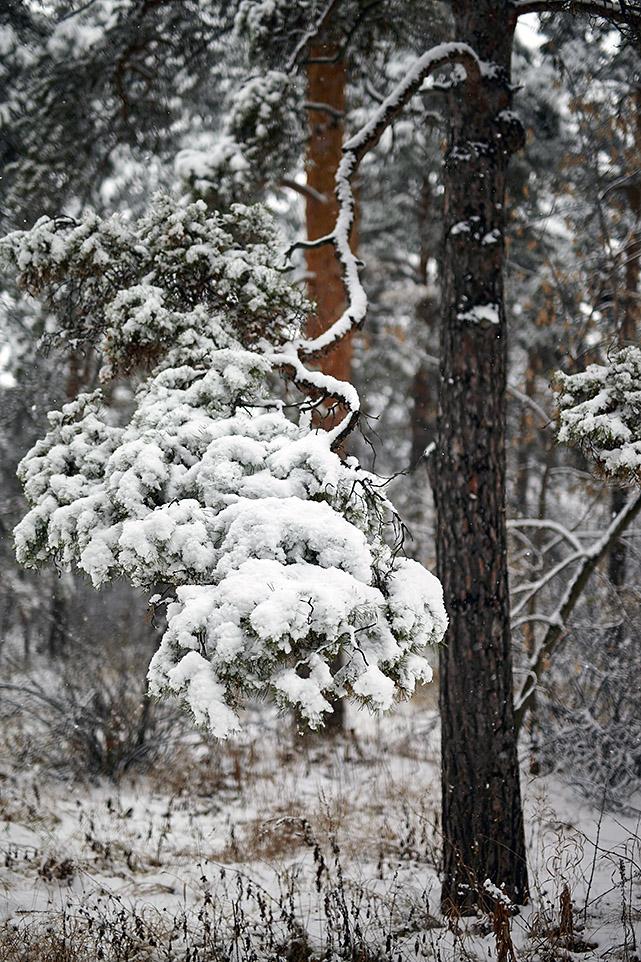 Тёплый снег 7
