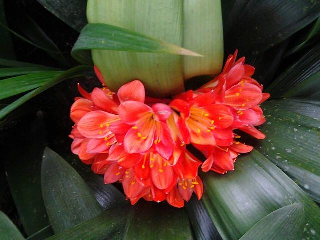 24515漂亮的花