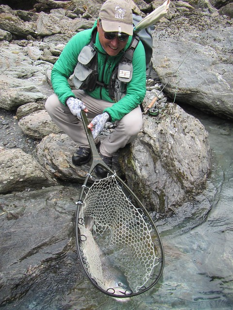 Brown Trout in net NZ