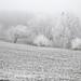 silent white world by albicocca1