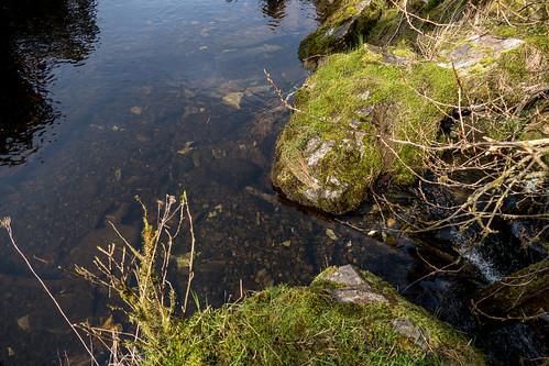 Creek flows underground - Basket Bay Bear Viewing