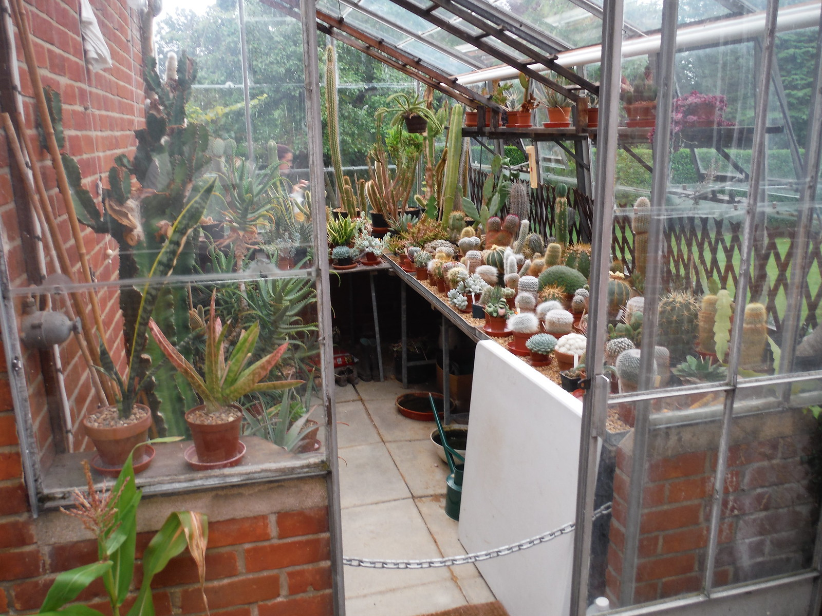 Cactus House (Hoglands) SWC Walk 164 Roydon to Sawbridgeworth via Henry Moore Foundation