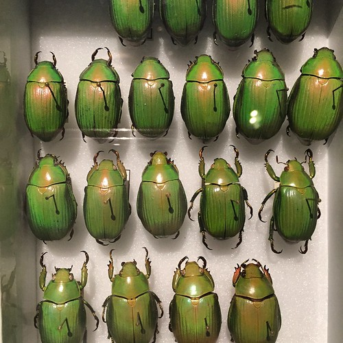 Boxes of beetles!