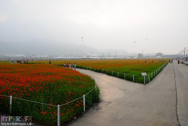 2015台中新社花海59