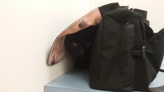 Dim Sim hiding
