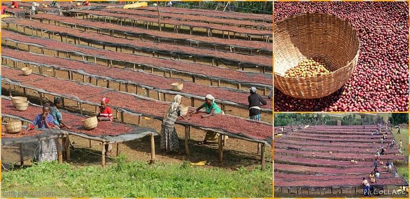 衣索匹亞 耶加雪菲 迷霧山谷咖啡豆 產區_960x465
