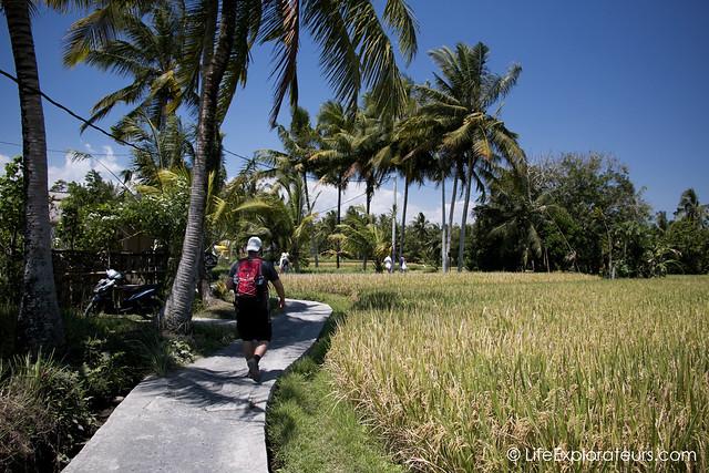 Rice-paddies-ubud