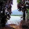 A pale view of hills.   The water level in the Kamarajar reservoir was thinning. Heat corrugated the air. Through a tope of rustling palmyra palms in the dry, rain-starved plain of Dindigul, the distant blueness of the Palni Hills was a promise of sustena