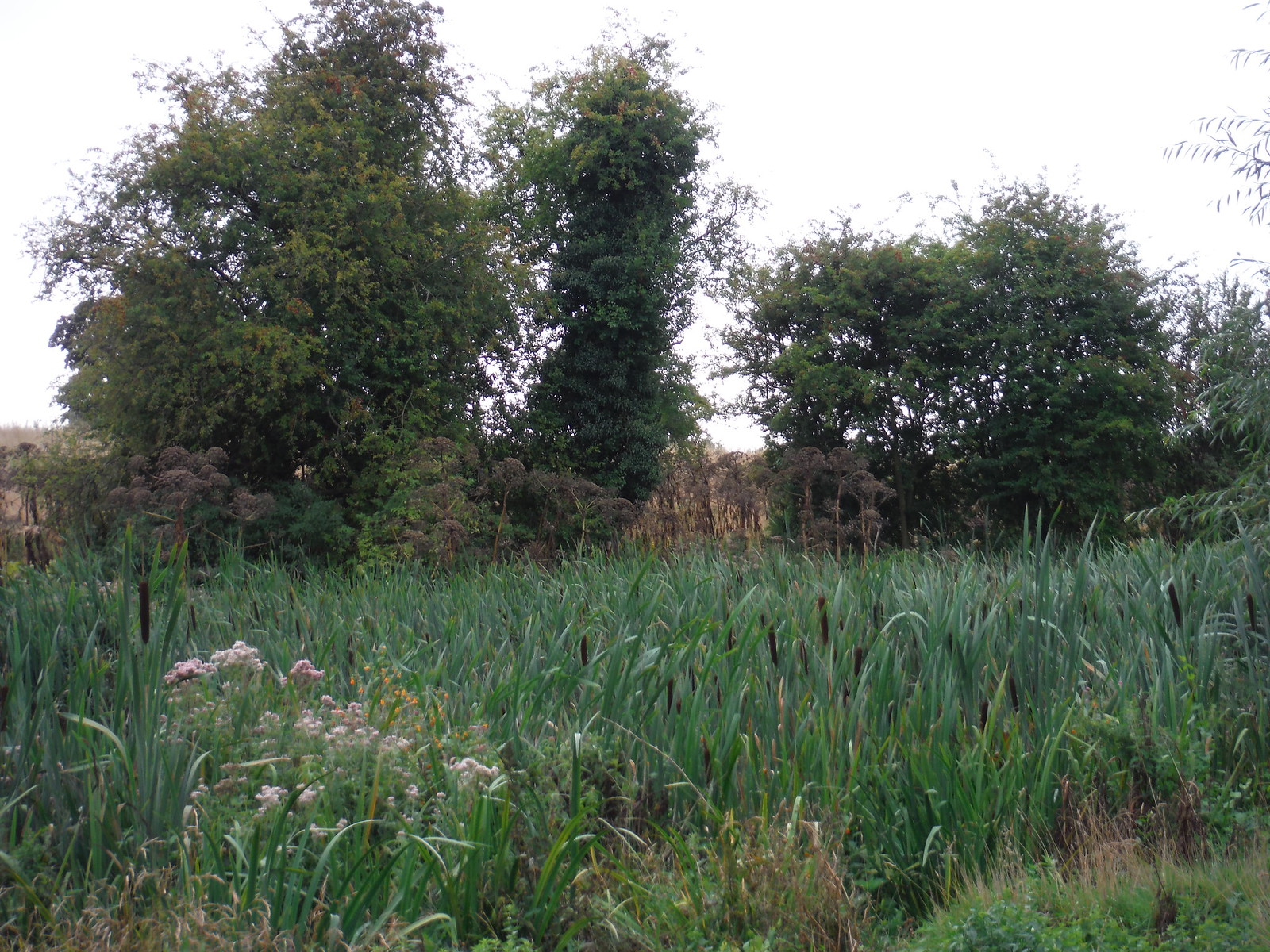 Pond by Stanstead Lodge (II) SWC Walk 164 Roydon to Sawbridgeworth via Henry Moore Foundation