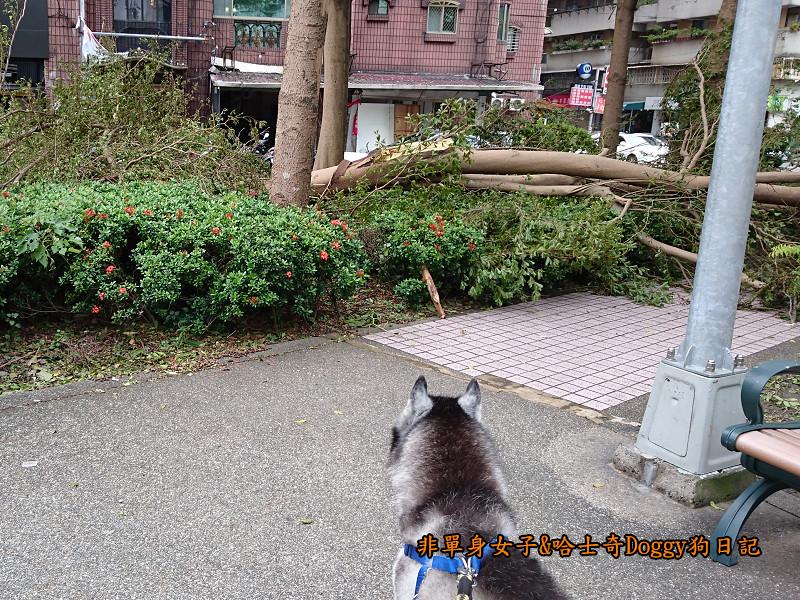 Doggy颱風23