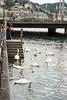День 8. Люцерн - количество живности на озере - зашкаливает