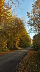 forêt d'automne - Photo of Mennessis