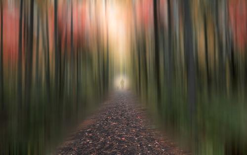 park autumn trees canada fall nature forest walking landscape nikon colours manipulation atlantic newbrunswick moncton maritimes irishtown d810 leadinlines nikon1635