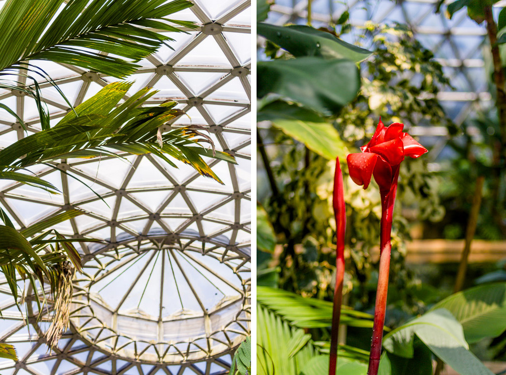 tropical dome mount coot-tha