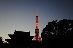 東京鐵塔, 東京塔, 日本電波塔, 增上寺, 東京, 日本, 東京タワー, とうきょうタワー, にっぽんでんぱとう, ぞうじょうじ, とうきょう, にっぽん, にほん, Tokyo Tower, Nippon Denpato, Zojoji, Tokyo, Japan, Nippon, Nihon