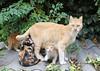 Cat family, Istanbul
