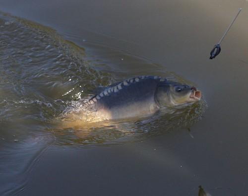 2008 - Rybářské závody