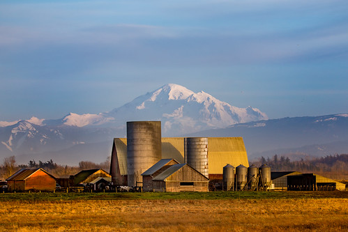 redriver redbarn barn red lummi river road mtbaker komokulshan farm golden yellow landscape outdoors outside happyness view whatcom county ferndale bellingham slater dexhorton