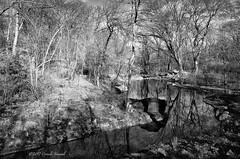 A Renovated Ravine