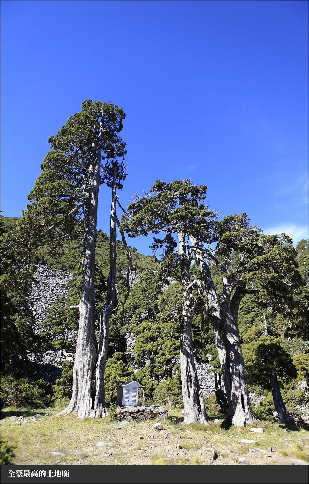 全臺最高的土地廟