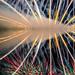 Calgary Global Fest Fireworks 2015 by Michael Mckinney (Find my Twitter @MMckinneypho
