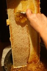 honey comb IMG_3907