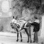 Donkey hauling Coca Cola drinks