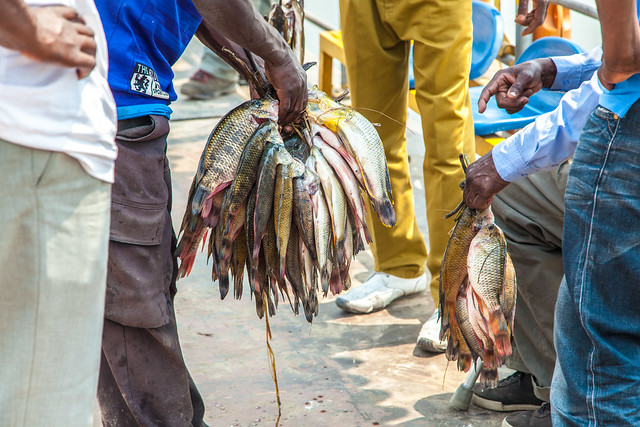 Trading fish, Barotse floodplain, Zambia. Photo by Clayton Smith.
