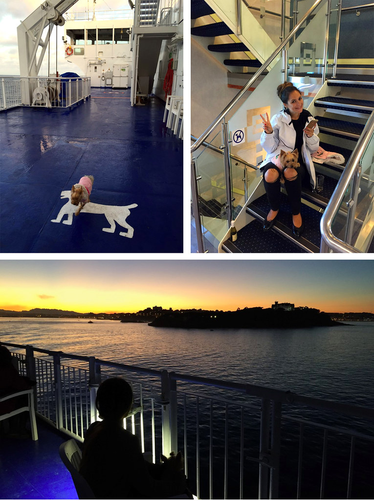 Viajar con mascotas a Reino Unido: A bordo de BrittanyFerries viajar con mascotas a reino unido - 23363701390 c6e30991f2 b - Viajar con mascotas a Reino Unido desde España