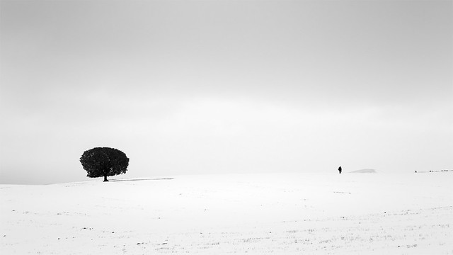 One Tree, One Photographer and the Snow