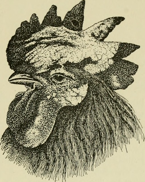 """Image from page 132 of """"Diseases of domesticated birds"""" (1920)"""
