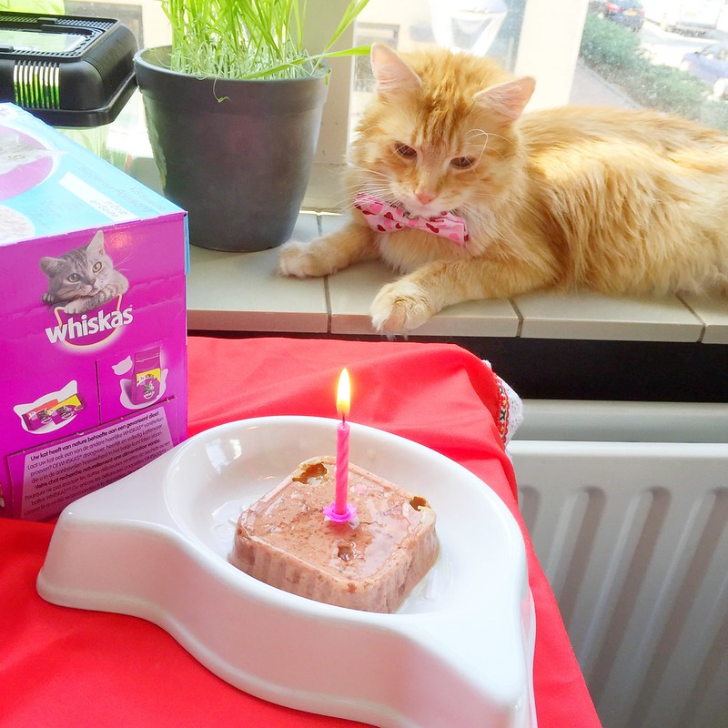 Sintra The Cat's very first Birthday: The day I found out I was afraid of my birthday candles