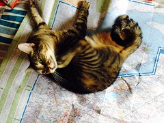 Let me help you with this map