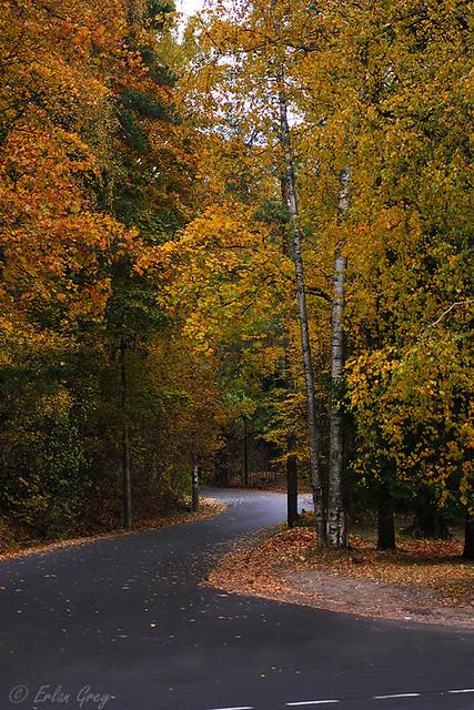 autumn_roads_15